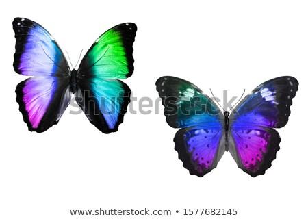 Regenboog vlinder realistisch alle kleuren witte Stockfoto © blackmoon979