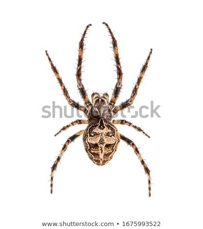 ヤモリ クモ 実例 面白い 漫画 トカゲ ストックフォト © adrenalina