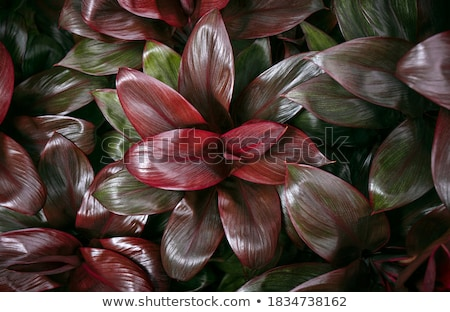 Pink dense foliage exotic nature background. Stock photo © yopixart