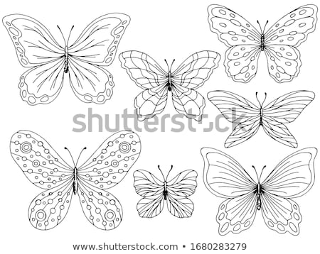 set of art butterflies stock photo © blackmoon979