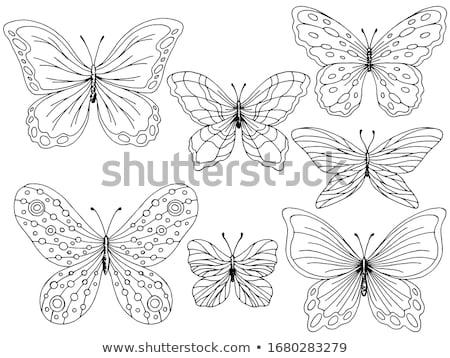Ayarlamak sanat kelebekler siyah Stok fotoğraf © blackmoon979