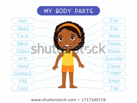 diagram showing human parts of girl stock photo © bluering