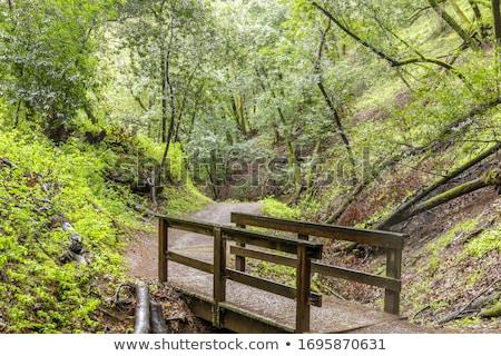 Footbridge in California Bay Laurel Forest. Stock photo © yhelfman