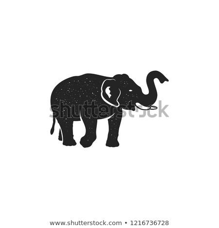 Elephant icon. Vintage hand drawn wild animal symbol. Monochrome retro design, style. With distresse Stock photo © JeksonGraphics