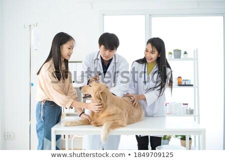счастливым ветеринар больным щенков женщины Сток-фото © Kzenon