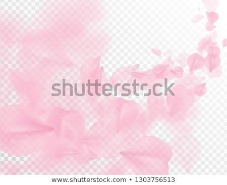 Roze rozen bloemblaadjes vallen transparant vector Stockfoto © Iaroslava