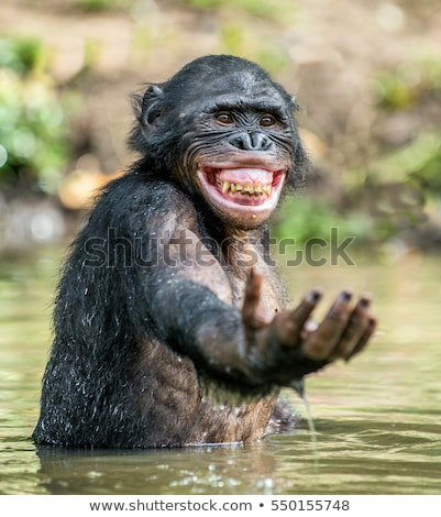 野生動物 立って 川 実例 自然 風景 ストックフォト © colematt