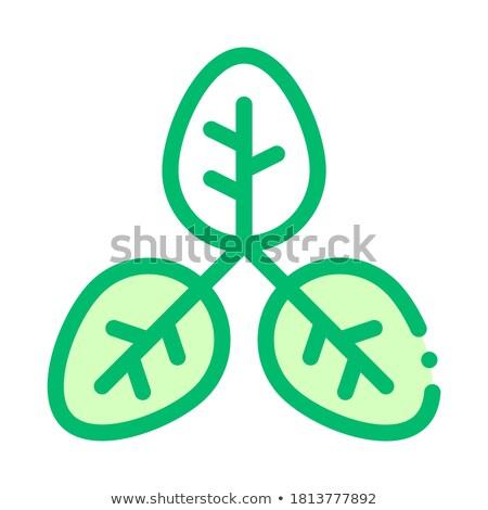 Bokor növény levelek vektor vékony vonal Stock fotó © pikepicture