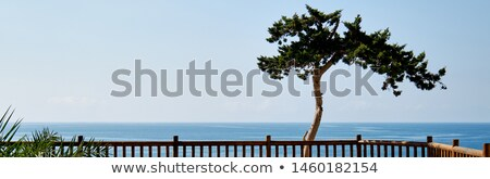 Panoramic view lonely tropical tree and Mediterranean sea  Stock photo © amok
