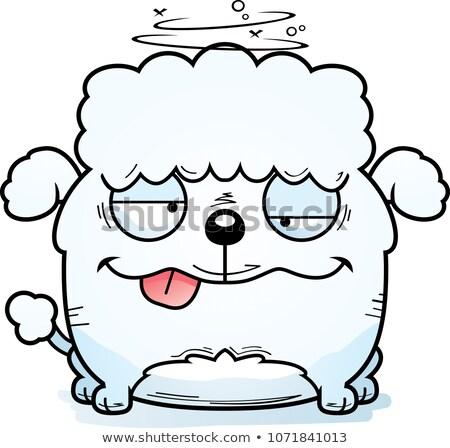 Drunk Little Poodle Stock photo © cthoman
