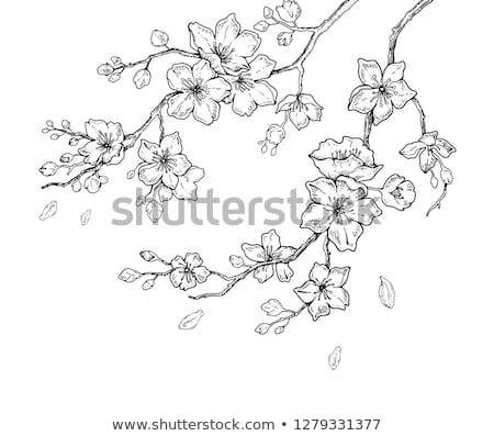Sakura çiçek şube kiraz çiçeği mürekkep vektör Stok fotoğraf © pikepicture