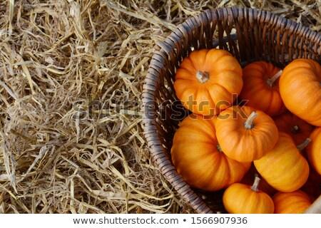 深い オレンジ ミニ カボチャ バスケット クローズアップ ストックフォト © sarahdoow