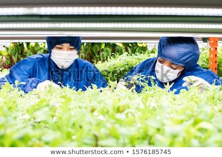 Due donne lavoro verde piantine nuovo impianti Foto d'archivio © pressmaster