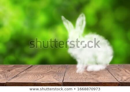 Nuage lapin de Pâques table en bois floue vert feuilles vertes Photo stock © artjazz