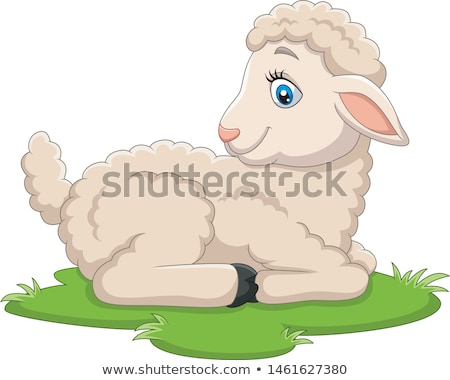 Sheep with Fluffy Wool, Small Young Lamb Vector Stock photo © robuart