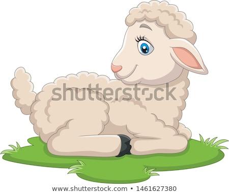 овец пушистый шерсти небольшой молодые ягненка Сток-фото © robuart