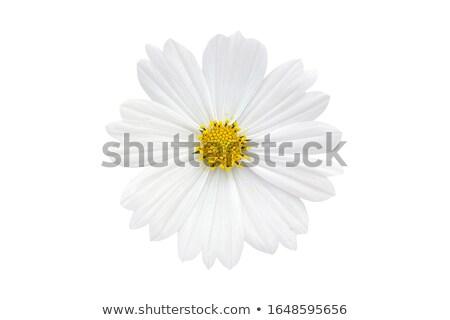 Branco par belo campo Japão planta Foto stock © craig