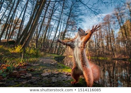 かわいい · リス · ブラウン · 赤 · 枕 · 森林 - ストックフォト © beemanja
