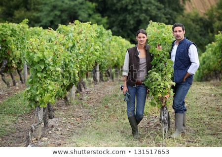 Farming couple collecting grapes Stock photo © photography33