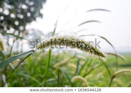 Erva daninha natureza flor verde amor grama Foto stock © sweetcrisis