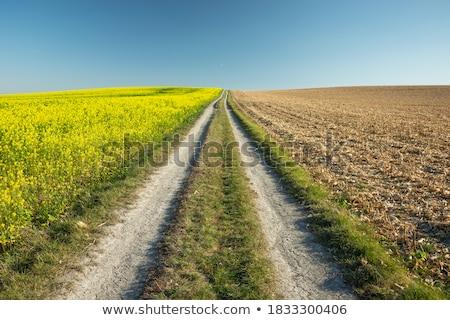 Sol viol herbe nature paysage été Photo stock © klagyivik