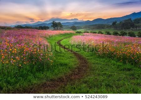 flower way Stock photo © szsz