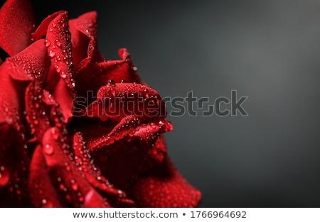 Nő rózsák kert gyönyörű fiatal nő napos Stock fotó © rozbyshaka
