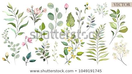 Flor planta elemento conjunto primavera natureza Foto stock © creative_stock