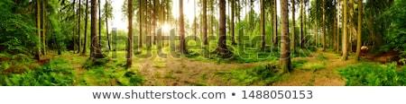 Panoráma legelő juhar fa fű természet Stock fotó © Freezingpictures