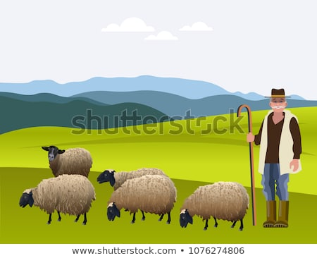 Sheep Grazing in Green Field Stock photo © wolterk
