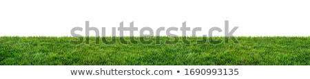 geïsoleerd · groen · gras · Blauw · achtergrond · ruimte · wolk - stockfoto © bloodua
