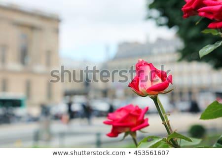 Vidro pirâmide clarabóia museu Paris França Foto stock © anshar