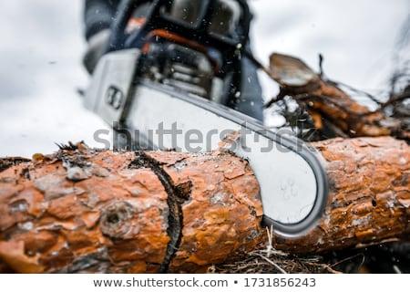 Láncfűrész tevékenység férfi vág lefelé fa Stock fotó © jayfish