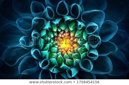 Close up shot of green abstract texture stock photo © shanemaritch