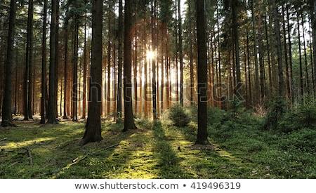 quente · pôr · do · sol · luz · solar · outono · floresta · luz - foto stock © kayco