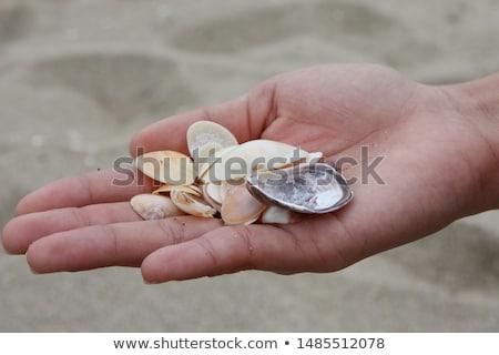 lány · tart · tengeri · csillag · tengerpart · gyerekek · tenger - stock fotó © monkey_business