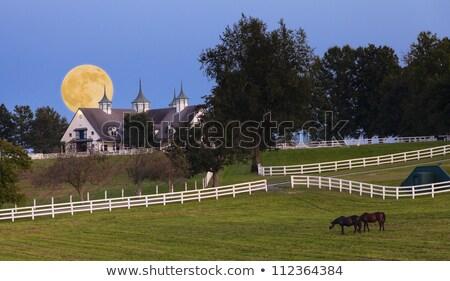 ケンタッキー州 月 地域 草 ストックフォト © alexeys