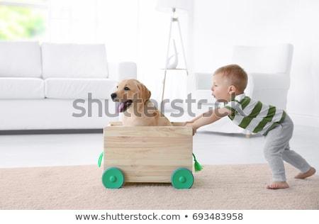 bebê · cão · bonitinho · caucasiano · hispânico · brasão - foto stock © phakimata