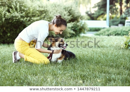 dog sitting with owner stock photo © willeecole