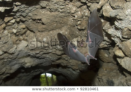 fruit bat mouth open stock photo © fouroaks