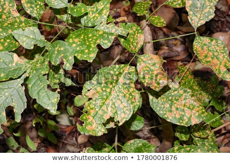 寄生虫 · 菌 · 成長 · 木の幹 · ツリー · 森林 - ストックフォト © hofmeester