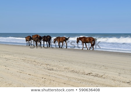 красивой пляж внешний Банки Америки древесины Сток-фото © meinzahn