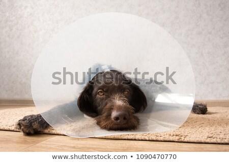 kutya · fej · kúp · folt · illusztráció · citromsárga - stock fotó © iconify
