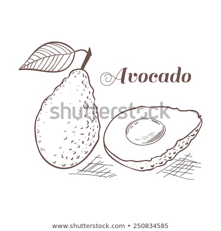 Avocado sketch icon. Stock photo © RAStudio