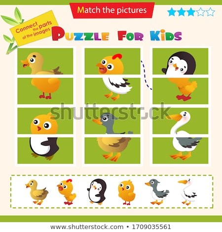 Matching game template with birds Stock photo © bluering
