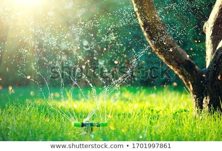 Grama criança mão água grama verde Foto stock © simply
