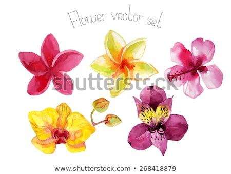 Flor tropical rosa deserto rosa flor folha Foto stock © tang90246