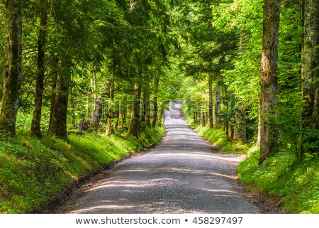 Sparks Lane in Cades Cove of Smoky Mountains, TN, USA. Stock photo © GreenStock