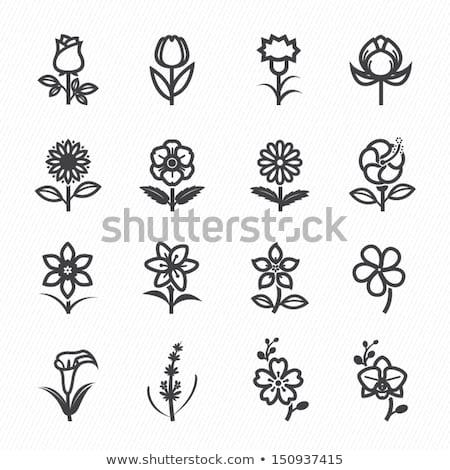 Dekoratív vektor hibiszkusz virág ikon kreatív Stock fotó © blumer1979
