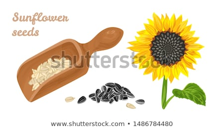 Słonecznika nasion ikona wektora piktogram stylu Zdjęcia stock © ahasoft